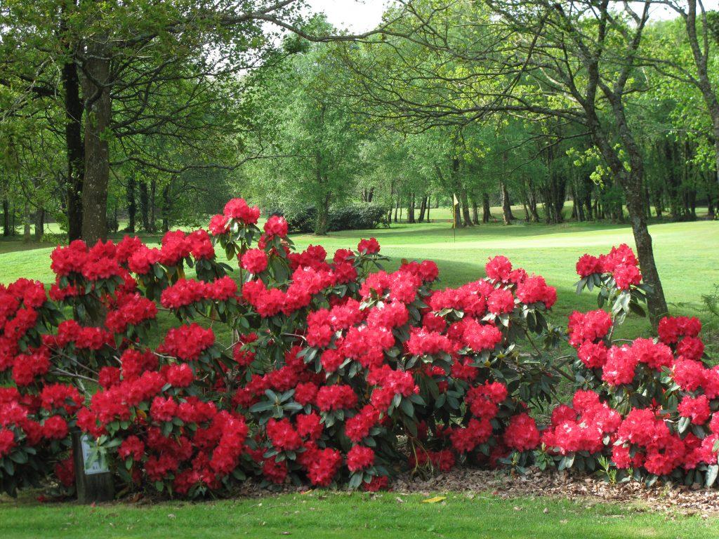 Lanhydrock Golf Club